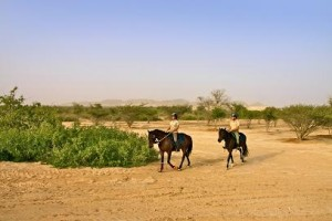 Sir Bani Yas Stables - Wildlife Horse Ride